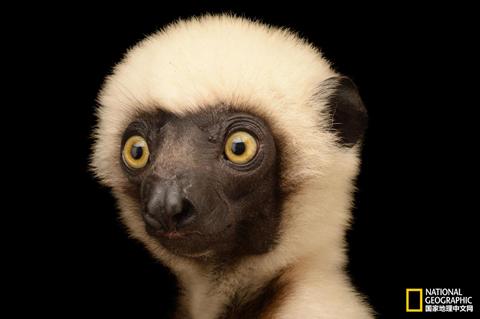 【影像】拍摄12000种动物照片